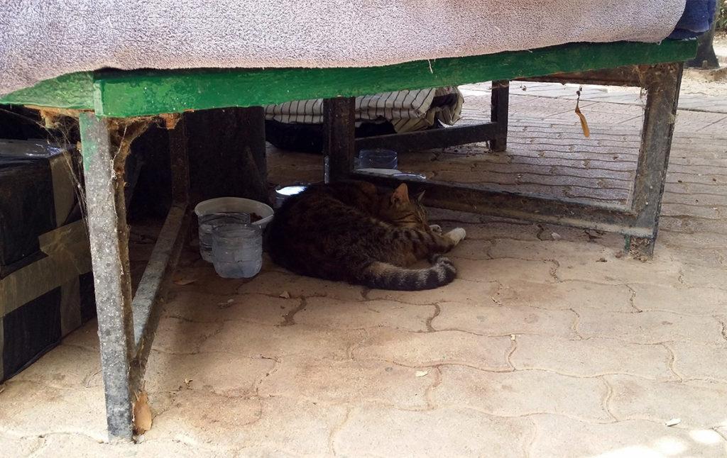Katt i skuggan